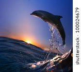 beautiful dolphin jumped from... | Shutterstock . vector #100024679