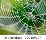 The Spider Web  Cobweb  Closeu...