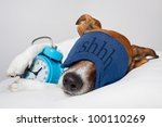 Stock photo dog sleeping with alarm clock and sleeping mask 100110269