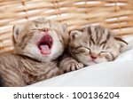 Stock photo adorable small kittens in wicker basket 100136204