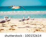 Seagulls Are Flying Against Th...