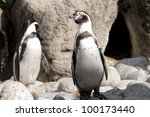 humboldt penguin at the zoo | Shutterstock . vector #100173440