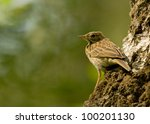 tree pipit | Shutterstock . vector #100201130