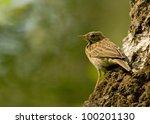 tree pipit | Shutterstock . vector #100201130