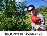 Young Woman Picking Apples Fro...