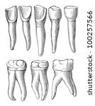 Teeth Collection   Vintage...