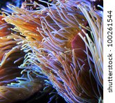 Close Up View Of Sea Anemone