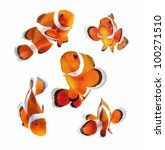 Reef Fish   Clown Fish Or...