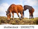 irish horses on the hill | Shutterstock . vector #100302770
