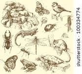 garden animals - hand drawn set
