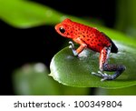 red strawberry poison dart frog ... | Shutterstock . vector #100349804