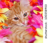 Stock photo red tabby kitten laying in flowers 100358903