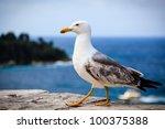 Graceful Seagull Walking In...
