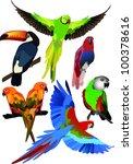parrots collection | Shutterstock .eps vector #100378616