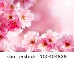 cherry blossom | Shutterstock . vector #100404838
