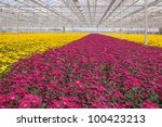 Advanced Dutch Greenhouse With...