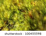 Background Of Green Moss ...