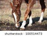 chestnut horse digging ground... | Shutterstock . vector #100514473