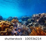 underwater shoot of vivid coral ... | Shutterstock . vector #100536214