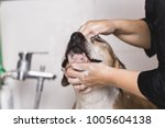 dog grooming process. adorable... | Shutterstock . vector #1005604138