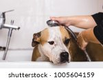 dog grooming process. adorable... | Shutterstock . vector #1005604159