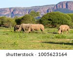 a crash of white rhinoceros... | Shutterstock . vector #1005623164