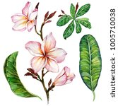 pink plumeria flower on a twig. ...   Shutterstock . vector #1005710038