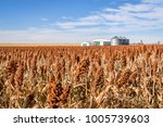 red sorghum field and farm... | Shutterstock . vector #1005739603