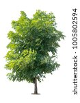 Isolated Green Tree On White...