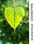 Bodhi Leave In Sun Effect  Als...