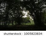 View Of Bamboos Alley In...