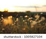 nature grass flower in sunset ... | Shutterstock . vector #1005827104