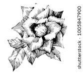 wild flowers roses isolated.... | Shutterstock .eps vector #1005847900