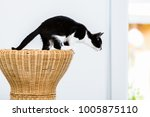 Stock photo cat about to jump from wicker stool at home 1005875110