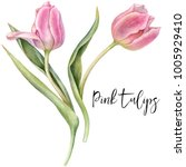watercolor pink tulips. | Shutterstock . vector #1005929410