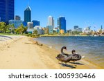 two black swans on the... | Shutterstock . vector #1005930466