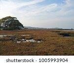 autumn landscape in newtown... | Shutterstock . vector #1005993904