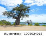 baobab tree in namibia  africa | Shutterstock . vector #1006024018