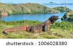 komodo dragon.   varanus... | Shutterstock . vector #1006028380