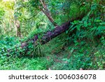 the forest tree with abundance. | Shutterstock . vector #1006036078