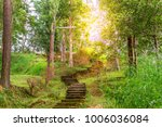 the forest tree with abundance. | Shutterstock . vector #1006036084