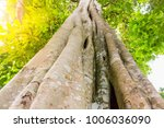 the forest tree with abundance. | Shutterstock . vector #1006036090