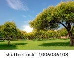 the forest tree with abundance. | Shutterstock . vector #1006036108