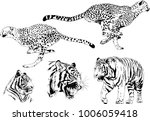 vector drawings sketches... | Shutterstock .eps vector #1006059418