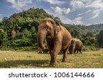 Elephants In Chiang Mai\'s...