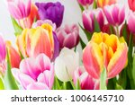 tulip. tulips spring flowers...   Shutterstock . vector #1006145710