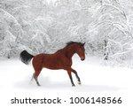 horse runs gallop on the winter ... | Shutterstock . vector #1006148566