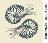 nautilus shells hand draw | Shutterstock .eps vector #1006157383