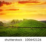 Tea Plantation Valley At Sunse...