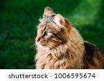 portrait of a cat sitting... | Shutterstock . vector #1006595674